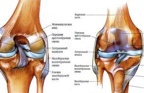 Какая норма толщины гиалинового хряща в коленном суставе таблетки от сильных болей в суставах