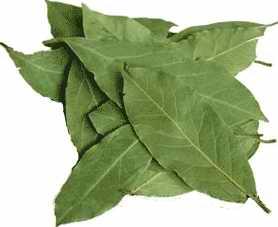 Очищение суставов - очищение суставов лавровым листом