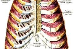 средства для укрепления хрящевой ткани суставов