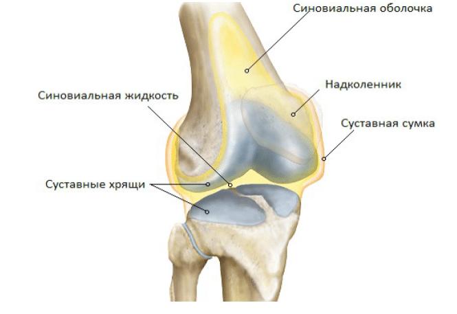 Болит коленный сустав слева Лечение Суставов