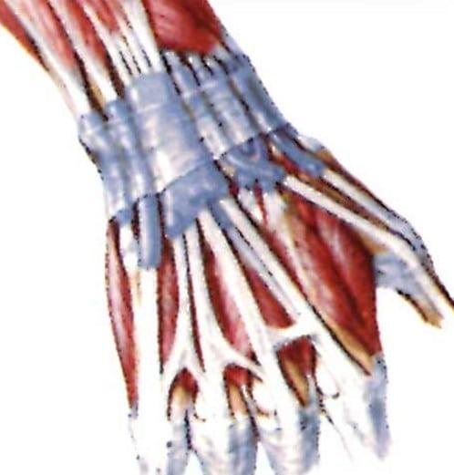 Лечение деформации сустава большого пальца ноги