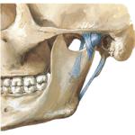 МРТ височно нижнечелюстного сустава