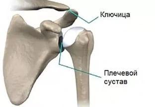 К какому врачу идти если болит плечо