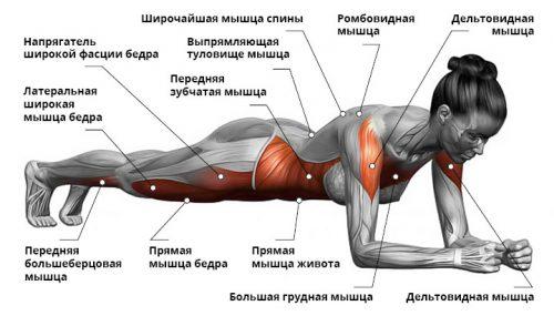 Упражнение планка при поясничной грыже позвоночника