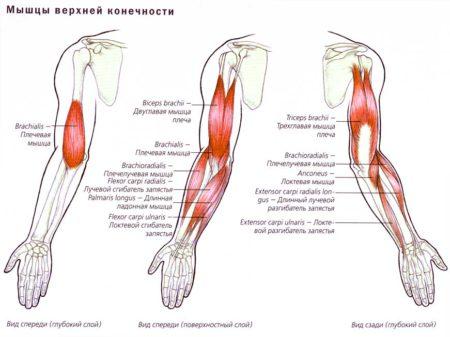 Эффективный комплекс ЛФК при вывихе плечевого сустава