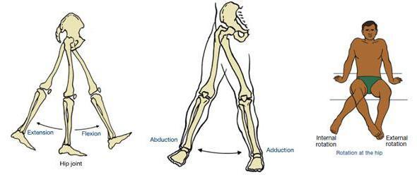 Разрыв сухожилия четырёхглавой мышцы бедра. К кому обращаться при возникновении данной патологии