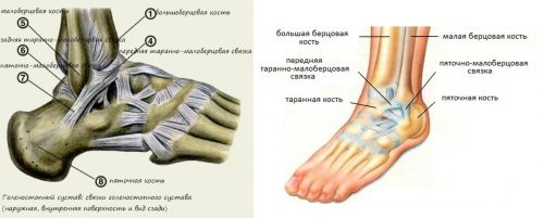 Лигаментоз голеностопного сустава