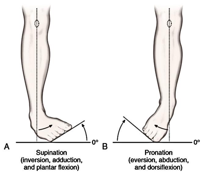 Пронация и супинация в коленном суставе фото