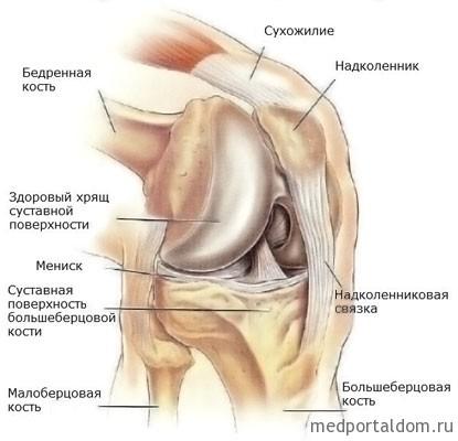 Методы восстановления хрящевой ткани после травм коленного сустава